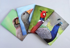 Wildlife photo cards